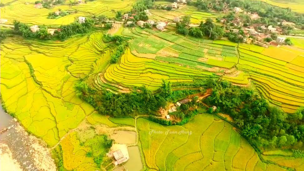 Yeallow harvest in Binh Lieu, Quang Ninh